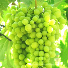 Engrais foliaire aux fruits (vitamine + NPK + acide aminé)