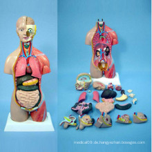 Menschliche Anatomie Körper Modell für medizinische Lehre