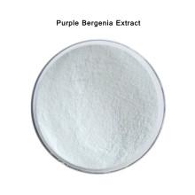 Best Quality Purple Bergenia Extract Powder 98% Bergenin