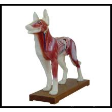 Acupuncture Animal Model (M--6-D Dog Model)