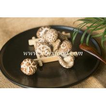 Nutritional Vegetable Dried Tea Flower Mushroom Producer