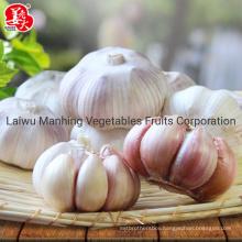 Super Fresh Garlic (normal white)