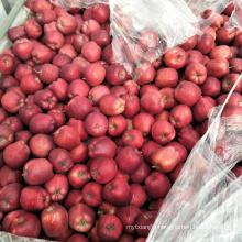 Huaniu apple fruit fresh apple fruit