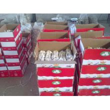 Alho branco chinês na caixa (4.5cm, 5.0cm, 5.5cm, 6.0cm)