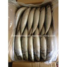 Хорошее качество Замороженная рыба тихоокеанской скумбрии