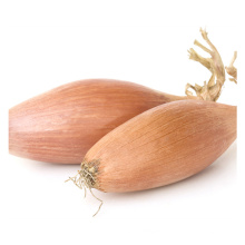 2021 New Season Fresh Vegetable Exporter With International Certifications Small Onion Shallot