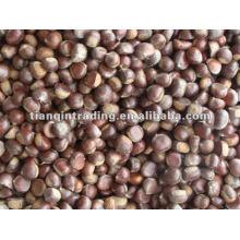 sweet chestnut for sale