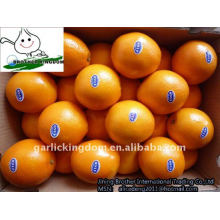 best navel orange from origin