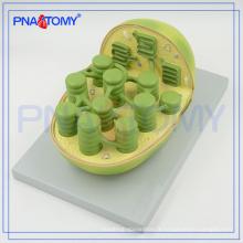 PNT-0837 école utilisé autoplast modèle biologique