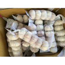 New Crop Normal White Garlic 5p/200g