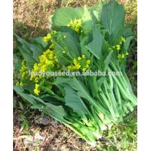 MPK23 Xichang early maturity pakchoi shum seeds, hybrid pakchoi seeds