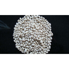 Haricots blancs Chine Origine