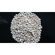 Weiße Bohnen Bohne Herkunft