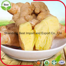 Preços de mercado picantes frescos para Ginger Supply Ginger