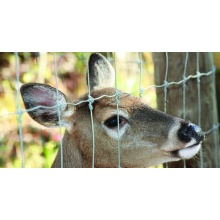 3 dimensionale Deer Fence