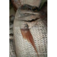 Peixe de peixe