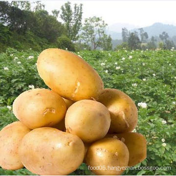 Offering High Quality Fresh Potatoes