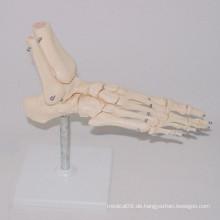 Medizinische Lehre Menschliche Fuß Skeleton Typen Modell (R020920)