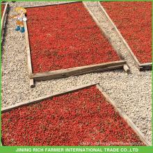 Exportador de bayas secas de Goji en China Goji Berry 380g granos / 50g Para Brasil