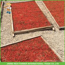 Exportador de Baga de Goji Seco na China Goji Berry 380g grãos / 50g Para o Brasil
