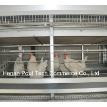 New Frame Hot Sale Chicken Cage