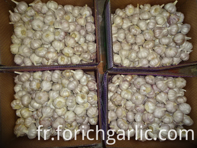 Jinxiang Normal White Garlic