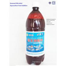 Algen Bio-Aquakultur-Futterzusatz