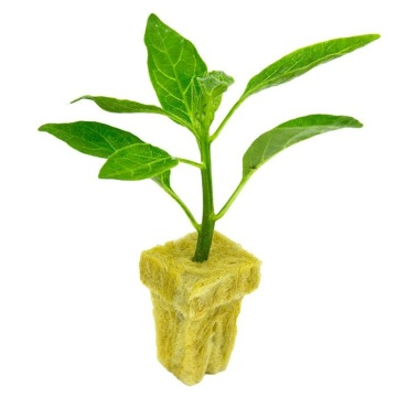 Hydroponics Rockwool Cube Plateau Rockwool Grow Media