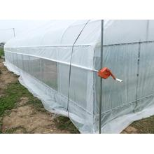 Großes haltbares kommerzielles PET-Film-Gewächshaus zum Pflanzen plant
