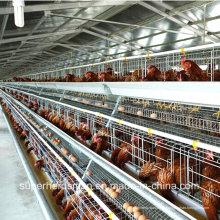 Equipamento de Avicultura para Camadas e Frangos de Corte