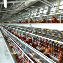 Птицефабрика Оборудование для несушек и бройлеров