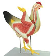 Compre uma galinha 12009 animal, modelo anatômico da galinha plástica de 8 partes