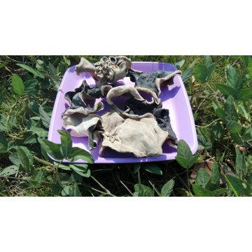 Secado chino blanco hongo negro corte de precio