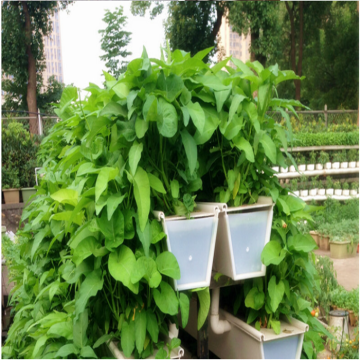Vertical PVC Hydroponic Strawberry Growing Systems