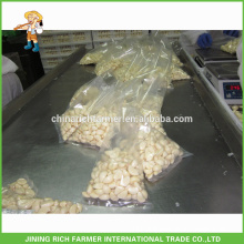 Excellent Quality Reasonable Price Fresh Peeled Garlic