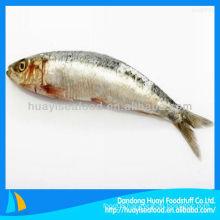 frozen sardine hgt wholesale