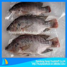 various size hot sale frozen whole round tilapia fish(gutted & scaled )