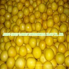 Pomelo frais