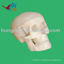 Modèle ISO Small Skull, modèle anatomique de la crâne anatomique