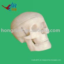 Modelo de crânio pequeno ISO, modelo de crânio anatômico médico