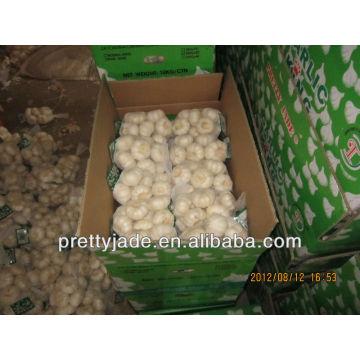 Китайский белый чеснок