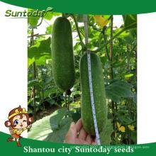 Suntoday para plantar una imagen de semillas de agricultura vegetal heriloom company semillas de cera orgánica calabaza chieh-qua (22001)