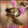 Dried fruits goji berry siyah goji berry gnc goji OEM Manufacture