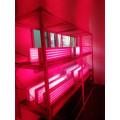 Luz de terapia vermelha e NIR luz de terapia led cob 300 W