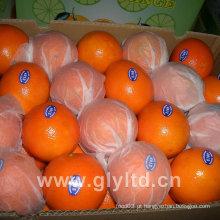 Nova safra de primeiro grau umbigo laranja