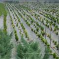 Tipo de paisajismo y cubierta y material de tela Weed Controle Fabric