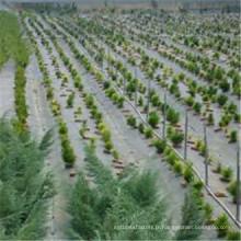 Tissu agricole de couverture végétale de barrière de mauvaise herbe de jardin agricole