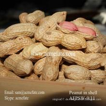 Neue Ernte Shandong Erdnuss in Schale 9/11