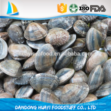 finely selected and processed short necked clam with shell