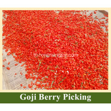 Goji Berry Tree Goji Berry ใหม่